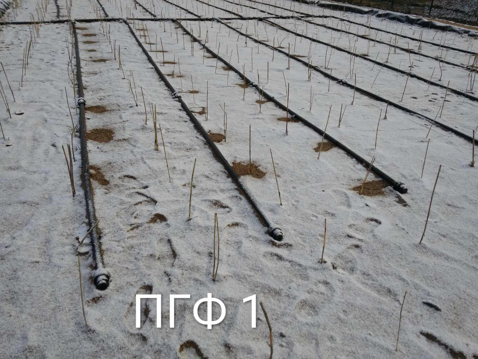 Stufe 1 mit Schilfpflanzen